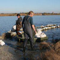 restauration d'un îlot de nidification