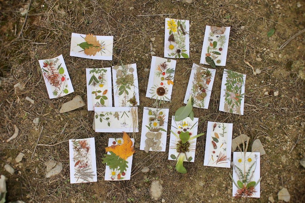 illustrations réalisées à partir de feuilles d'arbres et de plantes